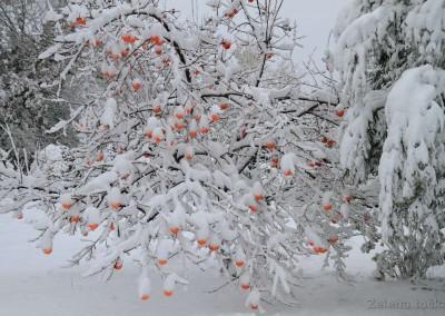 voćka u snijegu