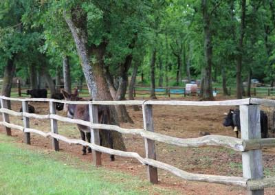 drvena ograda oko pašnjaka za krave