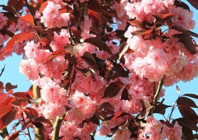 stablo u cvatu